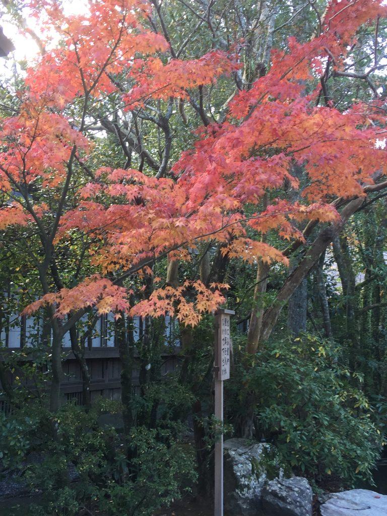 美しい紅葉